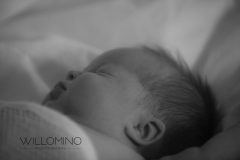 newborn-website-1